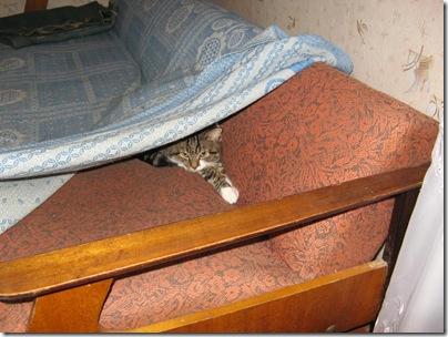 Кот в нычке