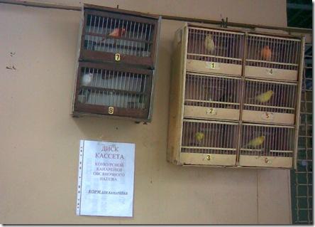 Обучающий диск для птиц