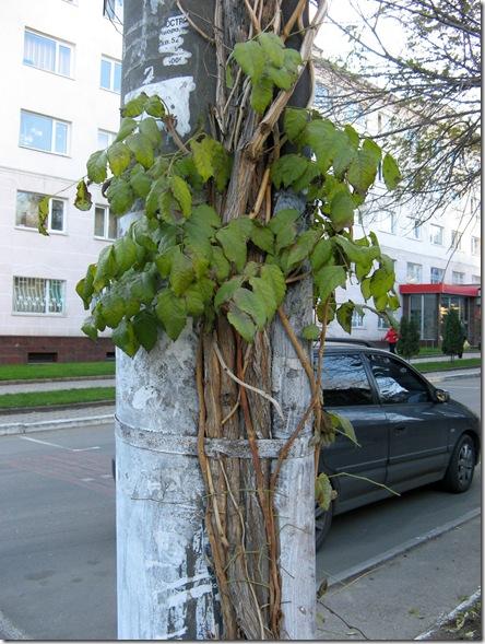 Деревья и столб