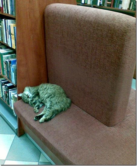 Кошка в магазине