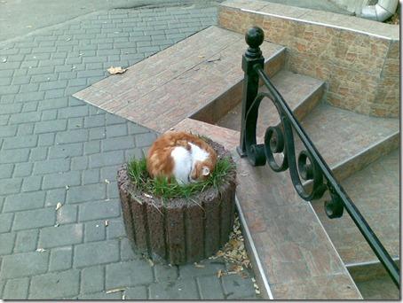 Кошка в клумбе