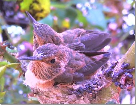 kolibri19