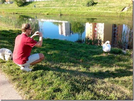Лебедь и собачка на берегу Хорватского канала (Братислава)