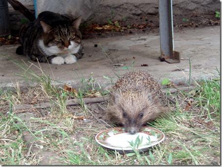 Обед на двоих
