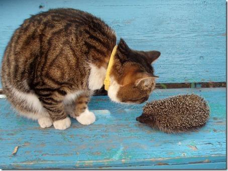 Знакомство - ёжик и кот